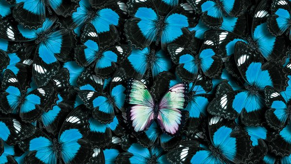Farfalla olografica spicca tra farfalle azzurre